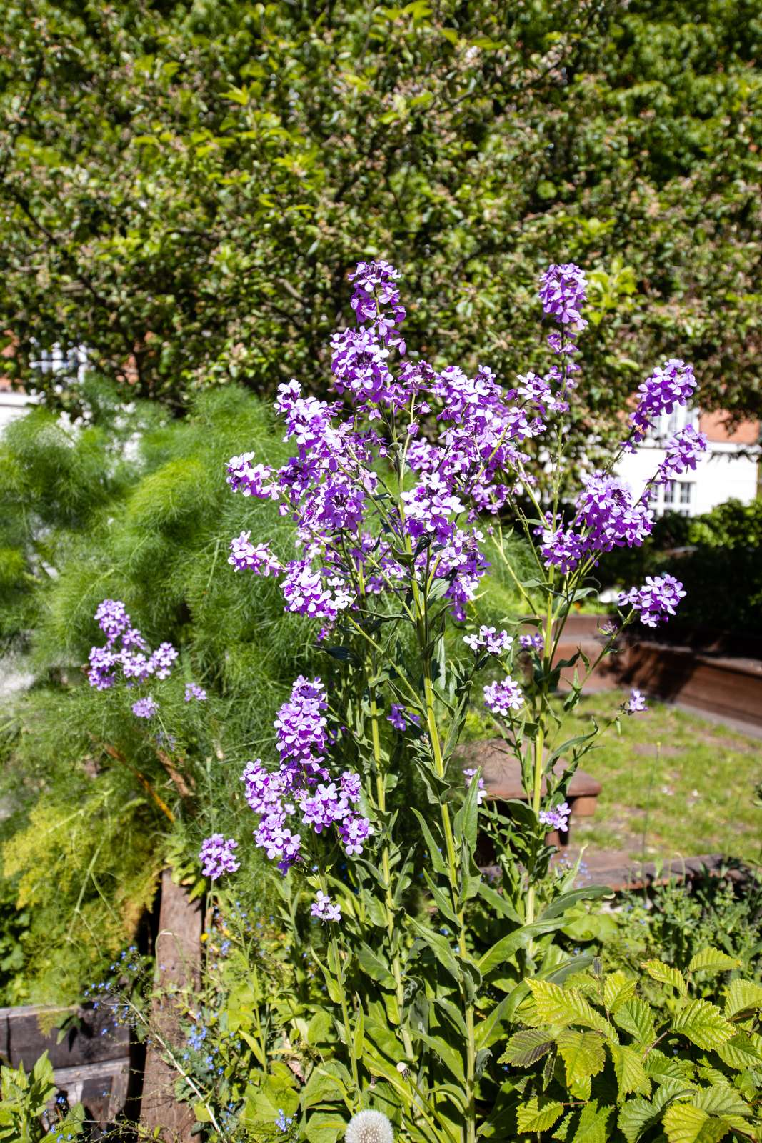 Lilla blomster ved Nyelandsvej 27-29
