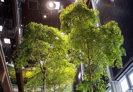 Træer på Sigurdsgade 26